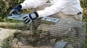 mission viejo commercial pest control