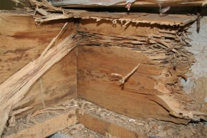 Mission Viejo termite damage